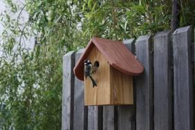 Anbringen von Nistkästen - Vögel sind natürliche Schädlingsbekämpfer