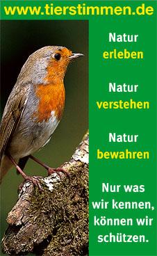 www.tierstimmen.de